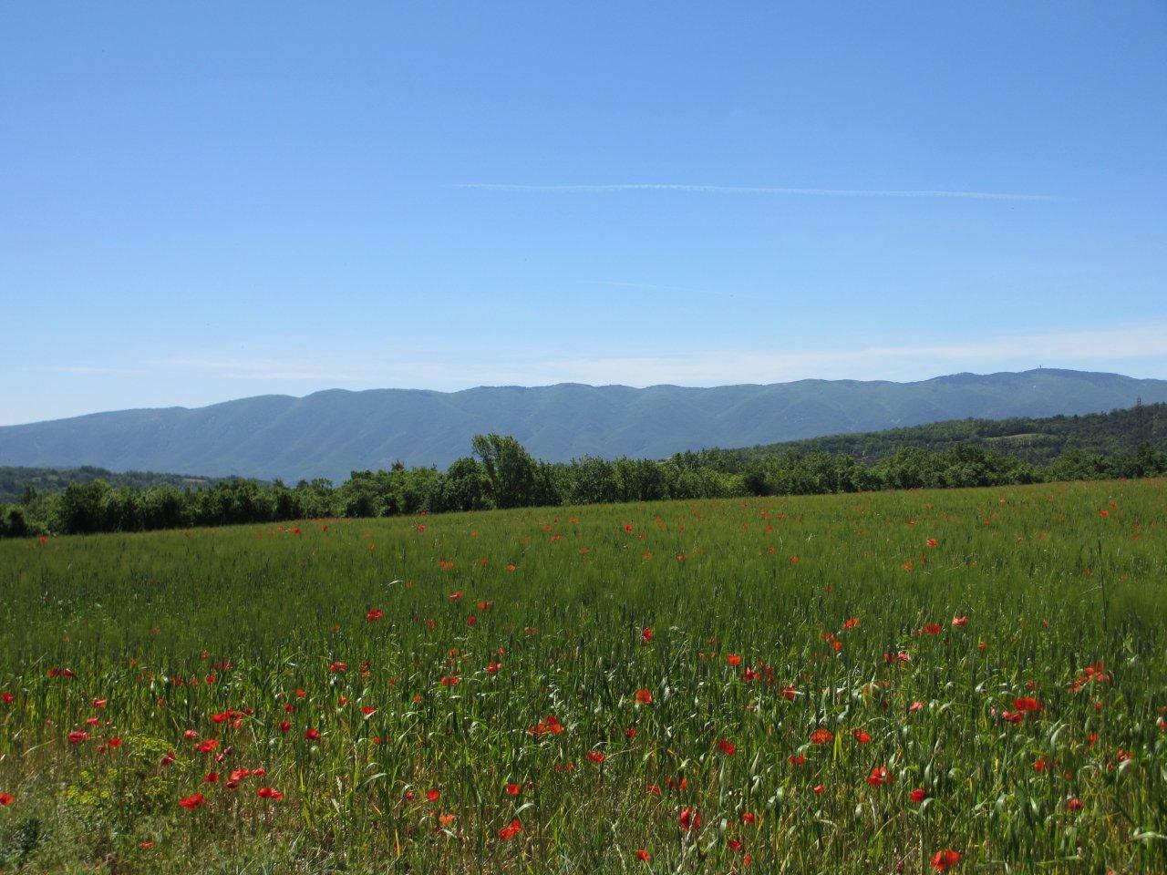 2012-05-23-13-24h-frankreich-provence-hochzeitsreise-179