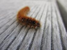 Christian hat sich seiner Leidenschaft, der Insektenfotografie hingegeben.... .